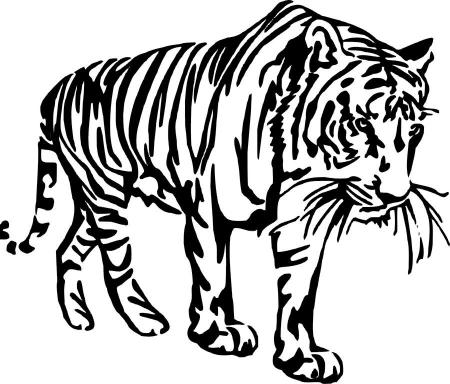 Tygrys Indyjski